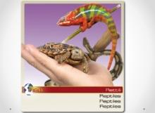 reptiles-y-tortuga