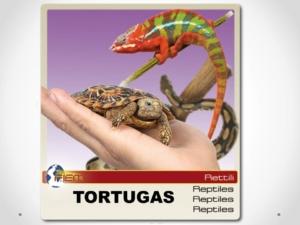 INCUBADORA TORTUGAS